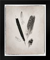 Feather Group II BW: Framed Art Print by Van Swearingen, Debra