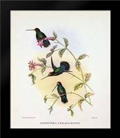 Dorifera Veraguensis: Framed Art Print by Ashley, Aaron
