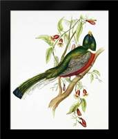 Trogon Ambiguus: Framed Art Print by Ashley, Aaron