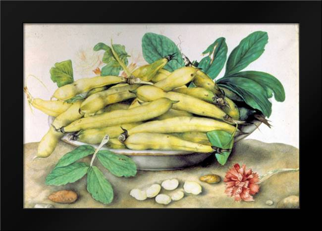 Dish of Broad Beans: Framed Art Print by Garzoni, Giovanna