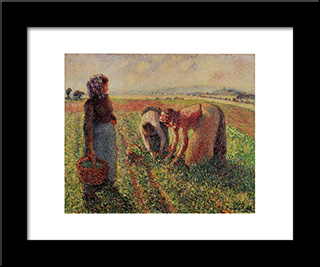 Picking Peas: Modern Black Framed Art Print by Camille Pissarro