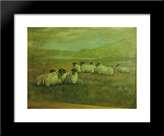 Sheep In Field: Modern Black Framed Art Print by Alexander Pope