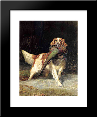 Springer Spaniel With Pheasant: Custom Black Wood Framed Art Print by Alexander Pope
