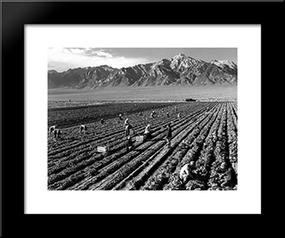 Farm, Farm Workers, Mt. Williamson In Background, Manzanar Relocation Center, California:  Modern Black Framed Art Print by Ansel Adams