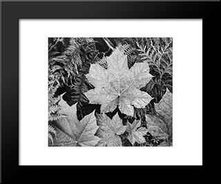 In Glacier National Park:  Modern Black Framed Art Print by Ansel Adams