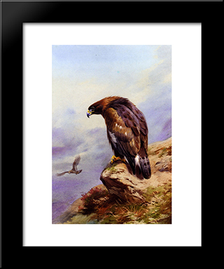 A Golden Eagle:  Modern Black Framed Art Print by Archibald Thorburn