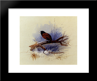 A Nepalese Black Headed Nun In The Branch Of A Tree:  Modern Black Framed Art Print by Archibald Thorburn