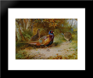 Autumn Covert:  Modern Black Framed Art Print by Archibald Thorburn