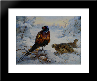 Cock And Hen Pheasant In Winter:  Modern Black Framed Art Print by Archibald Thorburn