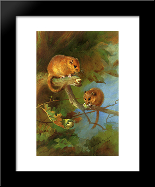 Dormice:  Modern Black Framed Art Print by Archibald Thorburn