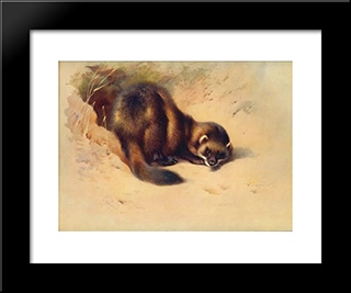 European Polecat:  Modern Black Framed Art Print by Archibald Thorburn