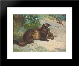 European Polecat Defending A Rabbit Carcass From A Least Weasel:  Modern Black Framed Art Print by Archibald Thorburn