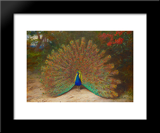 Peacock And Peacock Butterfly:  Modern Black Framed Art Print by Archibald Thorburn