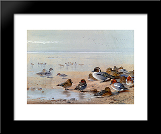 Pintail, Teal And Wigeon, On The Seashore:  Modern Black Framed Art Print by Archibald Thorburn