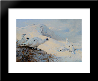 Ptarmigan Calling In The Snow:  Modern Black Framed Art Print by Archibald Thorburn