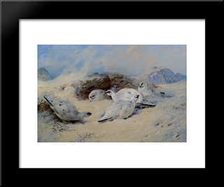 Ptarmigan Seeking Shelter:  Modern Black Framed Art Print by Archibald Thorburn