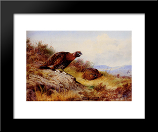Red Grouse On The Moor:  Modern Black Framed Art Print by Archibald Thorburn