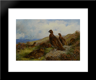 Red Grouse Packing:  Modern Black Framed Art Print by Archibald Thorburn