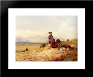 Red Partridges:  Modern Black Framed Art Print by Archibald Thorburn