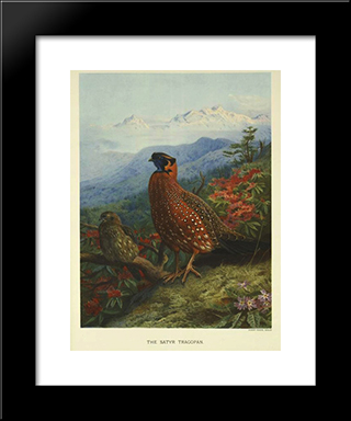 Satyr-Tragopan:  Modern Black Framed Art Print by Archibald Thorburn