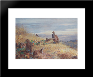 The Covey At Daybreak:  Modern Black Framed Art Print by Archibald Thorburn