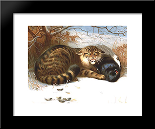 Wildcat:  Modern Black Framed Art Print by Archibald Thorburn