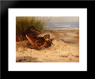 Woodcock Nesting On A Beach:  Modern Black Framed Art Print by Archibald Thorburn