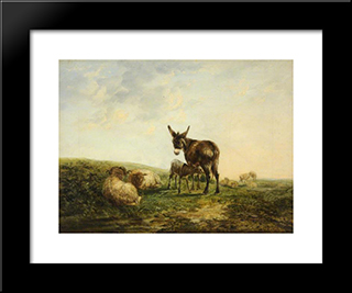 Donkey And Sheep:  Modern Black Framed Art Print by William Shayer