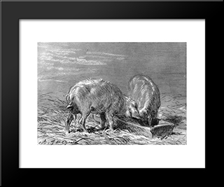 Two Pigs Eating From A Trough: Modern Black Framed Art Print by Charles Jacque