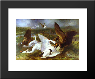 Swannery Invaded By Eagles: Modern Black Framed Art Print by Edwin Henry Landseer