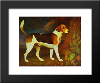 A Foxhound, Ringwod: Custom Black Wood Framed Art Print by George Stubbs