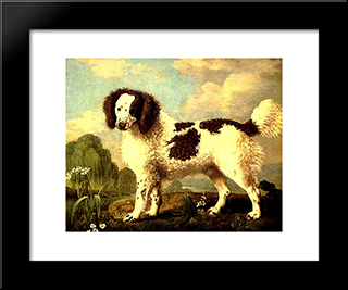 Brown And White Norfolk Or Water Spaniel: Custom Black Wood Framed Art Print by George Stubbs