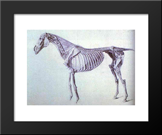 Diagram From The Anatomy Of The Horse: Custom Black Wood Framed Art Print by George Stubbs