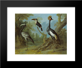Demoiselle Crane, Toucan, And Tufted Crane: Custom Black Or Gold Ornate Gallery Style Framed Art Print by Jean Baptiste Oudry