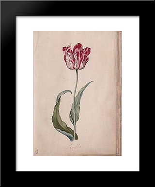 Tulip: Modern Black Framed Art Print by Judith Leyster