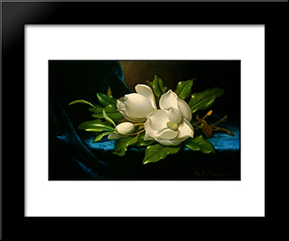 Giant Magnolias On A Blue Velvet Cloth: Modern Black Framed Art Print by Martin Johnson Heade