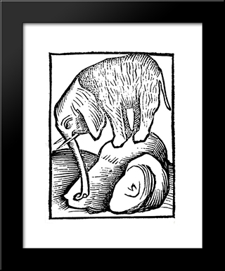 Elephant In Hortus Sanitatis: Modern Black Framed Art Print by Martin Schongauer