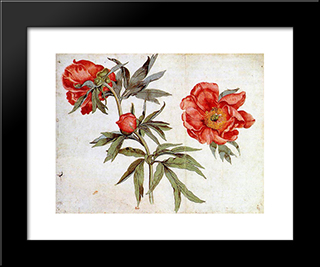 Study Of Peonies: Modern Black Framed Art Print by Martin Schongauer