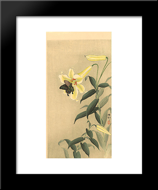 Butterfly And Lily: Modern Black Framed Art Print by Ohara Koson