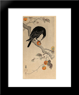 Crow Eating A Persimmon: Modern Black Framed Art Print by Ohara Koson