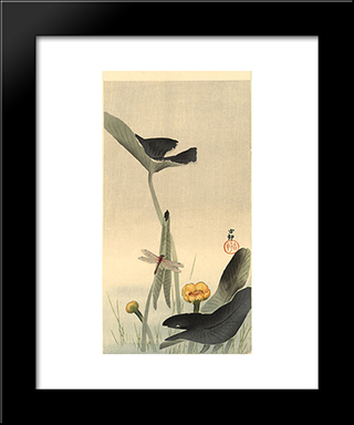 Dragonfly And Lotus: Modern Black Framed Art Print by Ohara Koson