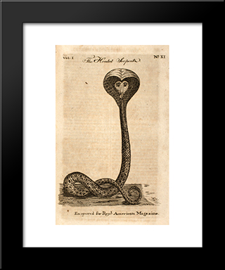 Hooded Serpent: Modern Black Framed Art Print by Paul Revere