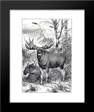 Alces Alces: Modern Black Framed Art Print by Richard Friese
