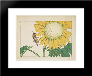Grasshopper And Sunflower: Modern Black Framed Art Print by Shibata Zeshin