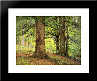 Beech Trees: Modern Black Framed Art Print by T. C. Steele