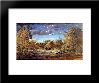 Glade Of The Reine Blanche In The Fontainebleau Forest: Modern Black Framed Art Print by Theodore Rousseau