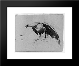 Eagle (From Sketchbook): Modern Black Framed Art Print by Thomas Sully