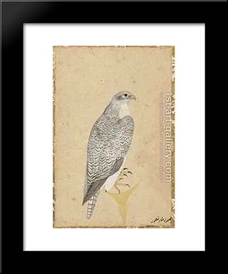 Portrait Of A Falcon From Northern India: Modern Black Framed Art Print by Ustad Mansur