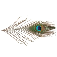 "Peacock Eye Tails - Natural - 4""-10"""