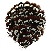 Venery Pheasant, Black, Brown, White Feather Pad